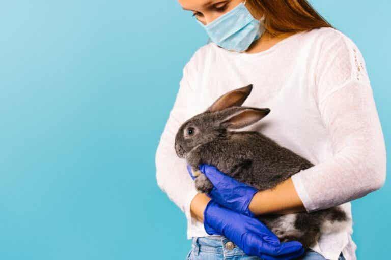 Sykdommer overført av kaniner