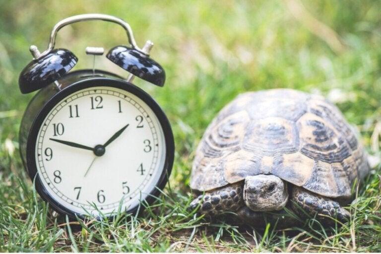 Hvor lenge lever en skilpadde i fangenskap?