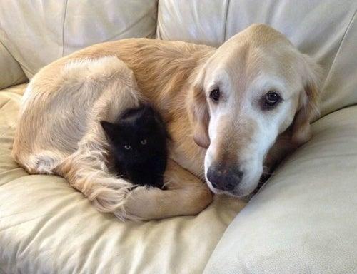 Forsberg de hond en z'n vriendschap met een kat
