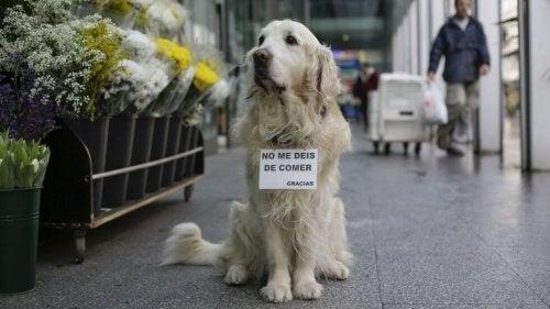 Ney: de hond van het standbeeld op Plaza de Lugo