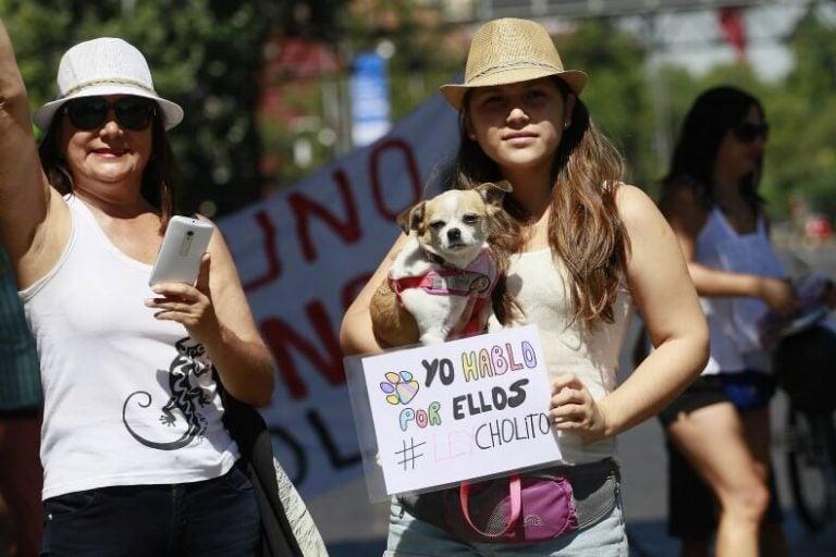 Protesten tegen dierenmishandeling