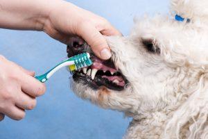 Tanden van je hond poetsen