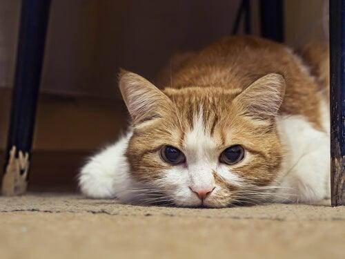 Toldo, de kat die dagelijks het graf van zijn eigenaar bezocht