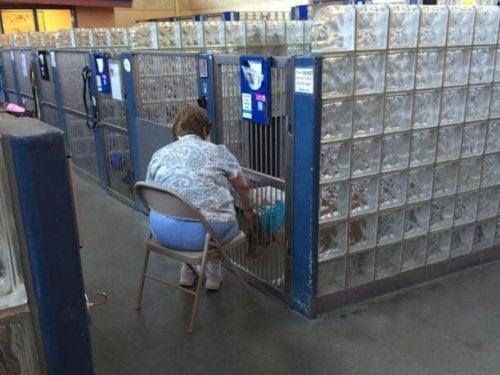 Vrouw leest honden voor in het asiel