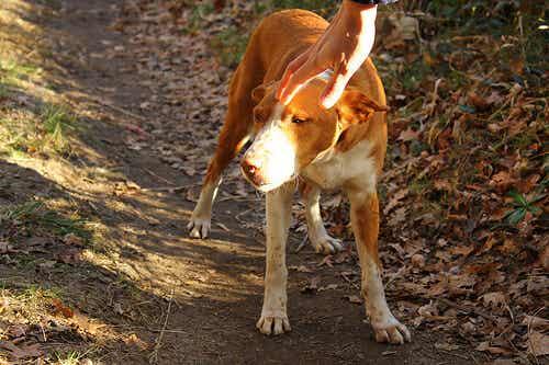 Koppel weigerde hun eigen achtergelaten hond terug te nemen