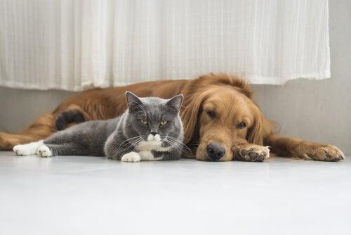 Het houden van een huisdier is dé oplossing tegen oud worden.