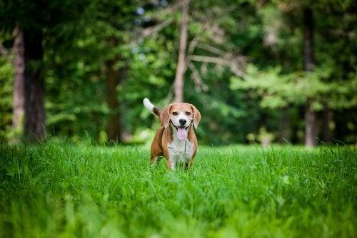Hyperactieve hond in het bos