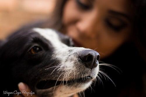Hond met zijn 'ouder'