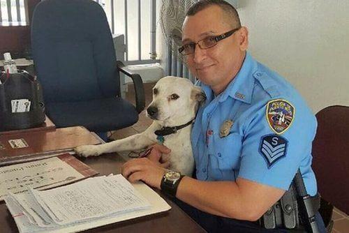 Een straathond die plotseling politieagent werd
