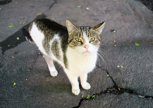 Eenzame kat op straat