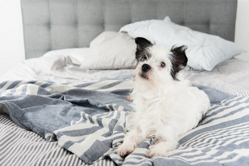 Hond in bed zorgt voor gedragsproblemen