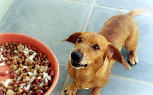 Hond krijgt gemengd voer