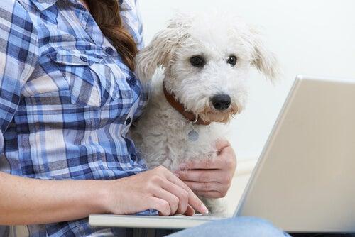 Help je hond altijd zijn slechte gedrag te voorkomen en sluit hem niet op