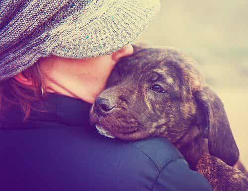 Je hond als baby behandelen, het is geen goed idee