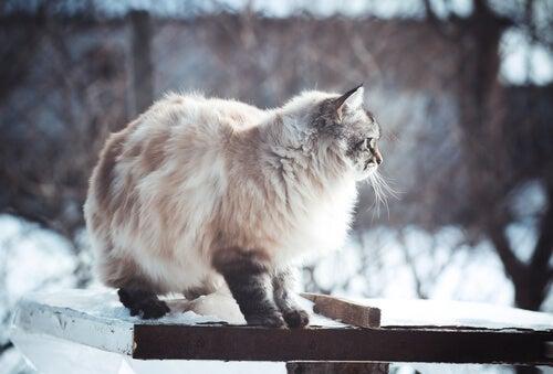 Kat in sneeuw