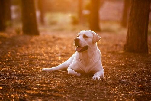 Leer van je hond