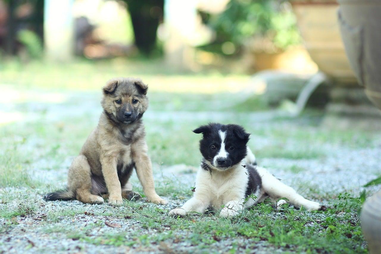Mishandelde honden worden vrienden