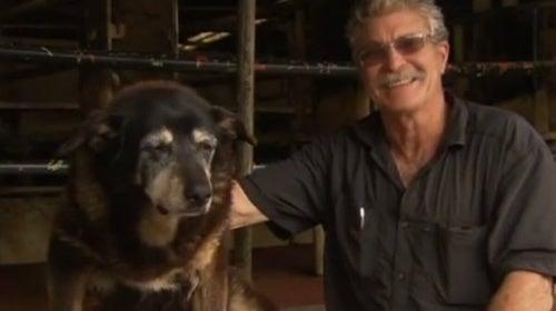Oudste hond van de wereld sterft