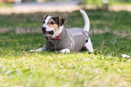 Je hond warm houden: een gids voor de winter