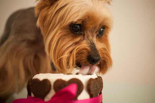 Waarom je nooit snoepjes aan je huisdier moet geven