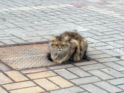 Een in de steek gelaten kat wacht in Belgorod een jaar op zijn eigenaar