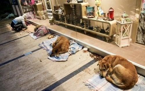 Zwerfhonden slapen in een winkelcentrum in Istanboel