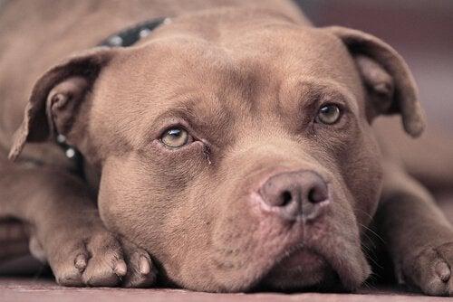 Hond werd gered uit een auto.
