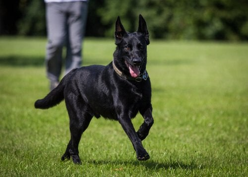 Zwarte hond buiten