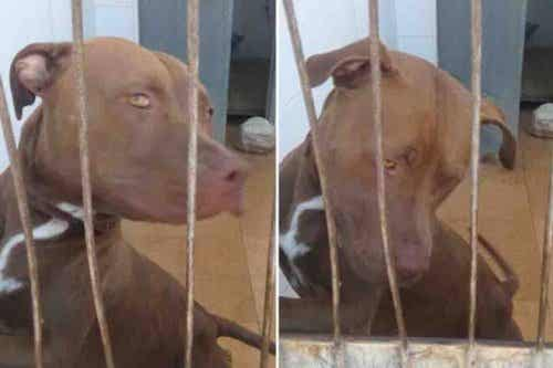 Hond werd gered uit een auto en herstelt in opvang