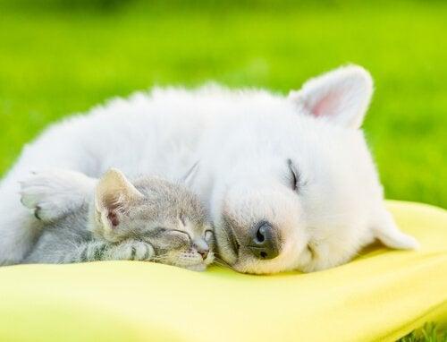 Waarom het zo belangrijk is om te zorgen dat je hond slaapt