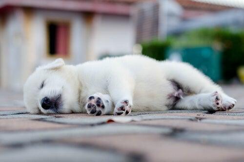 Hond slaapt buiten
