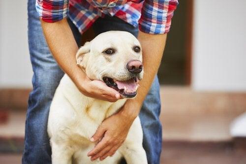 Hond met baasje
