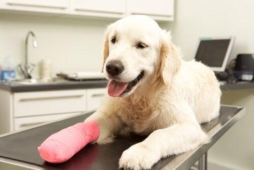 Wat moet er in de verbanddoos van je hond zitten?
