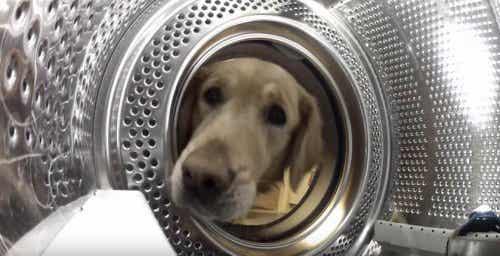 """Obsessie voor speeltjes: hond redt zijn """"vriend"""" uit de wasmachine"""