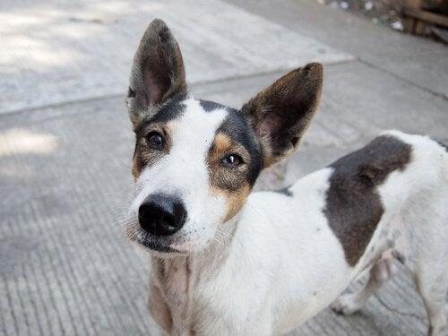 Een spannende campagne ter promotie van hondenadoptie