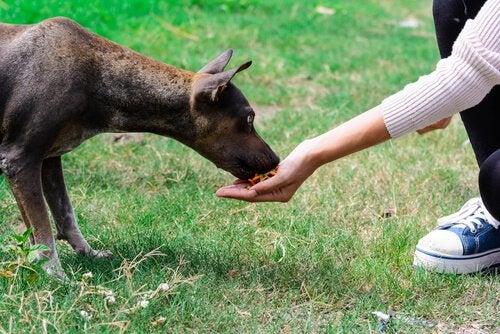 Een hond eet uit de hand van een kind