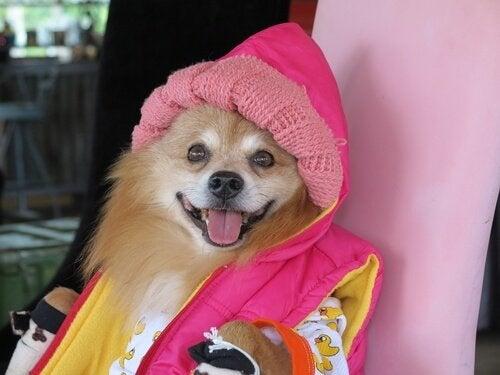 Hond met een roze jas aan