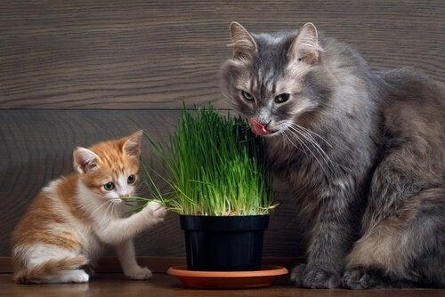 Twee katten spelen met plant