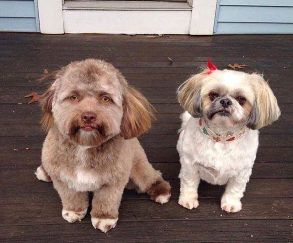 Een hond met een menselijk gezicht
