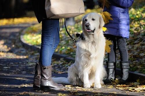 Hond die netjes naast zijn baasje zit in plaats van dingen van de grond te eten