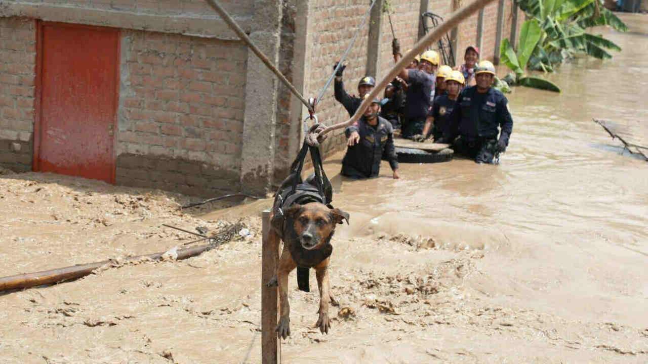 Jongeman zet leven op het spel om een hond te redden