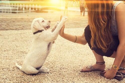 Kan een hond linkspotig zijn?