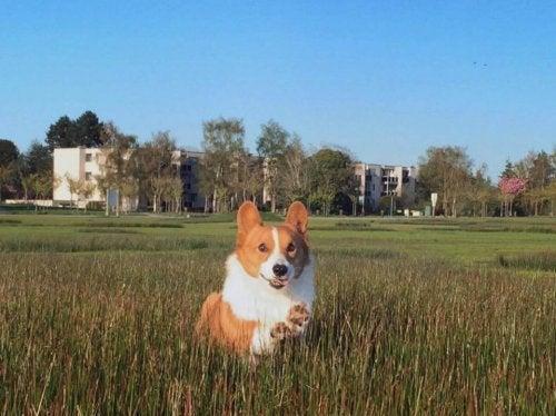 Loki, een van de bekenste honden van het internet, is overleden