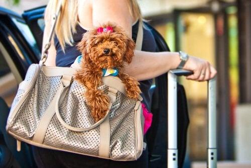 Reizen met je hond? Deze apps zijn handig!