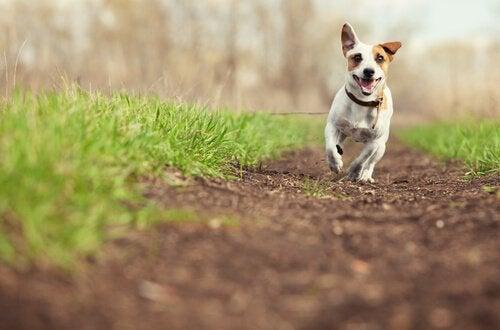 Een hond die lekker buiten holt