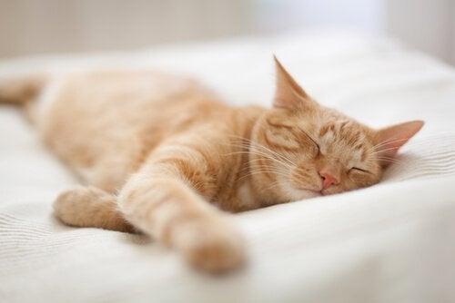 Huisdieren dromen