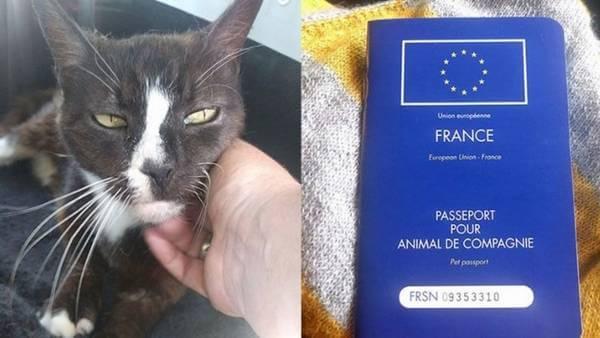 Vermiste kat uit Londen in Parijs