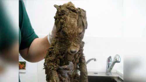 Geredde dieren: mysterieus dier volledig bedekt met modder
