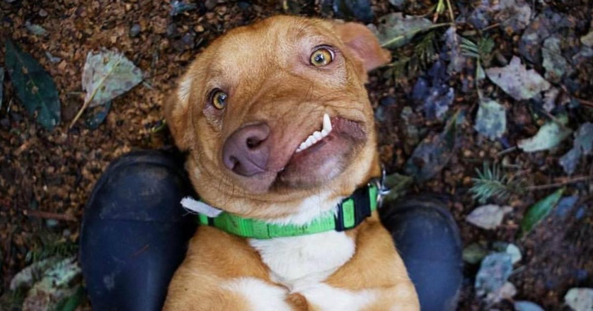 Picasso de hond