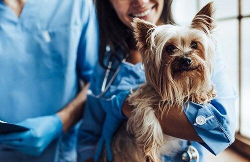 5 Voordelen van het steriliseren/castreren van huisdieren